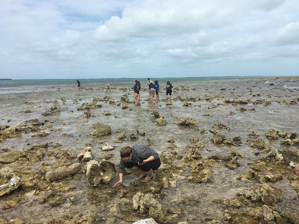 Belize 2020 Beach Research